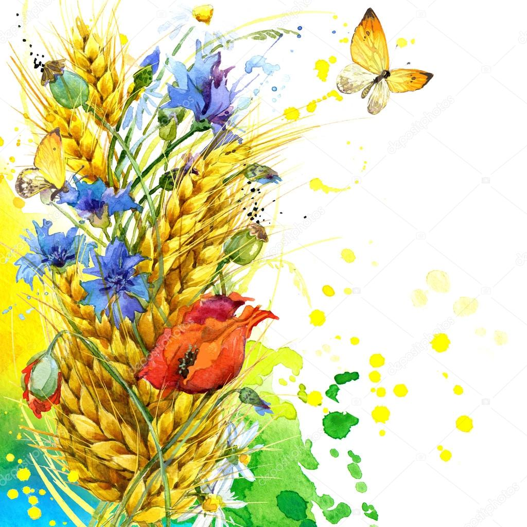wild flower and wheat. watercolor