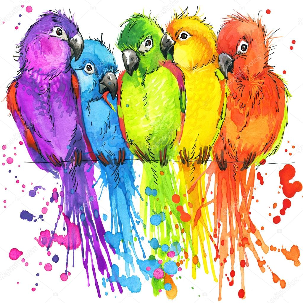 T-shirt graphics colorful parrots, illustration watercolor