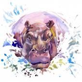 Hippopotamus T-shirt graphics,  African animals hippopotamus illustration with splash watercolor textured background. unusual illustration watercolor  hippopotamus fashion print, poster for textiles, fashion design