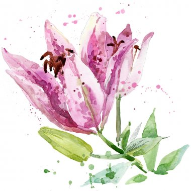 Summer garden flowers. watercolor illustration