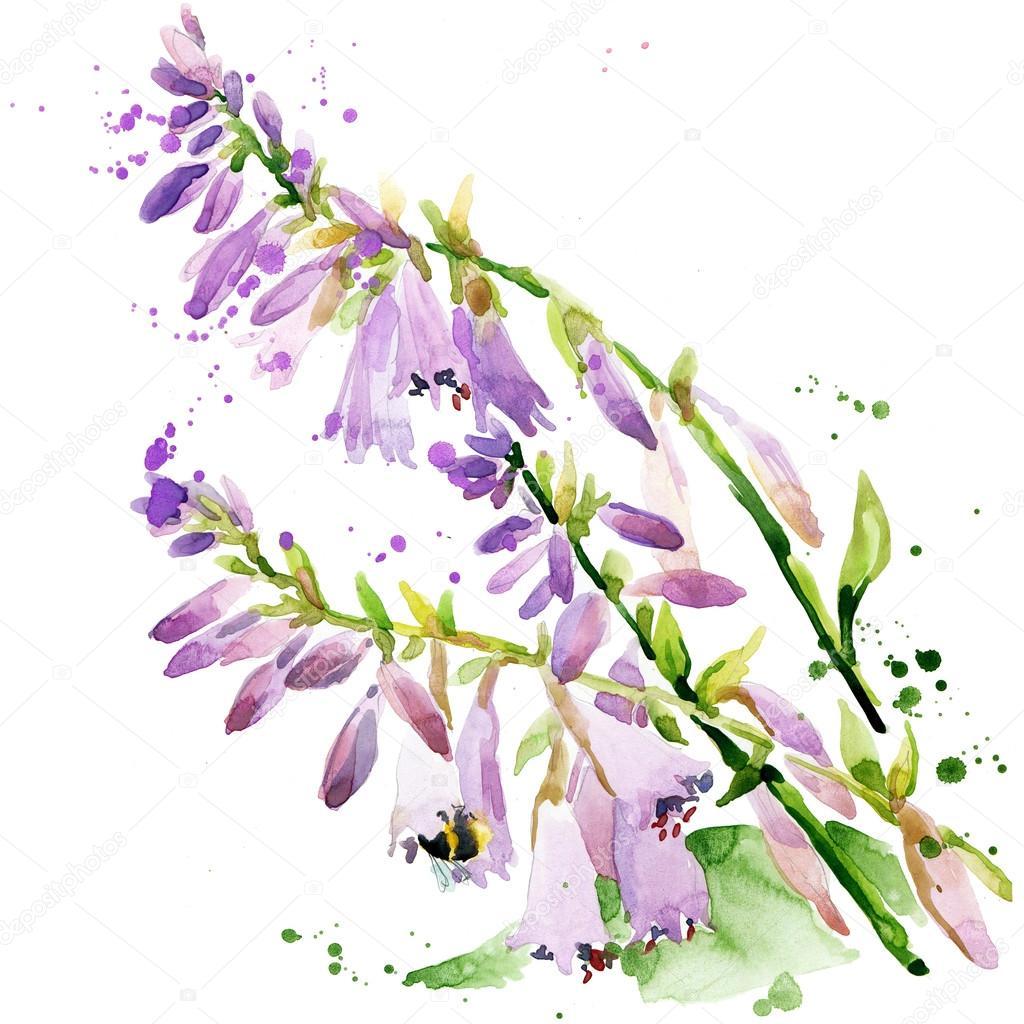 Summer garden flowers. watercolor illustration