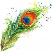 Exotické paví pero tričko grafika. Páv obrázek s logem akvarel texturou pozadí. neobvyklé ilustrace akvarel Páv pro módu tisknout, plakát, textil, módní design