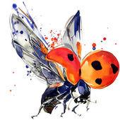 Katica bogár póló grafika, akvarell splash Katica illusztráció texturált háttér. illusztráció akvarell Katica divat nyomtatás, poszter, textil, divattervezés