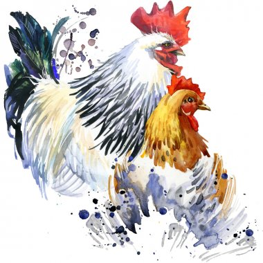 rooster and chicken graphics, rooster and chicken illustration with splash watercolor textured background. illustration watercolor breeding rooster fashion print, poster for textiles, fashion design