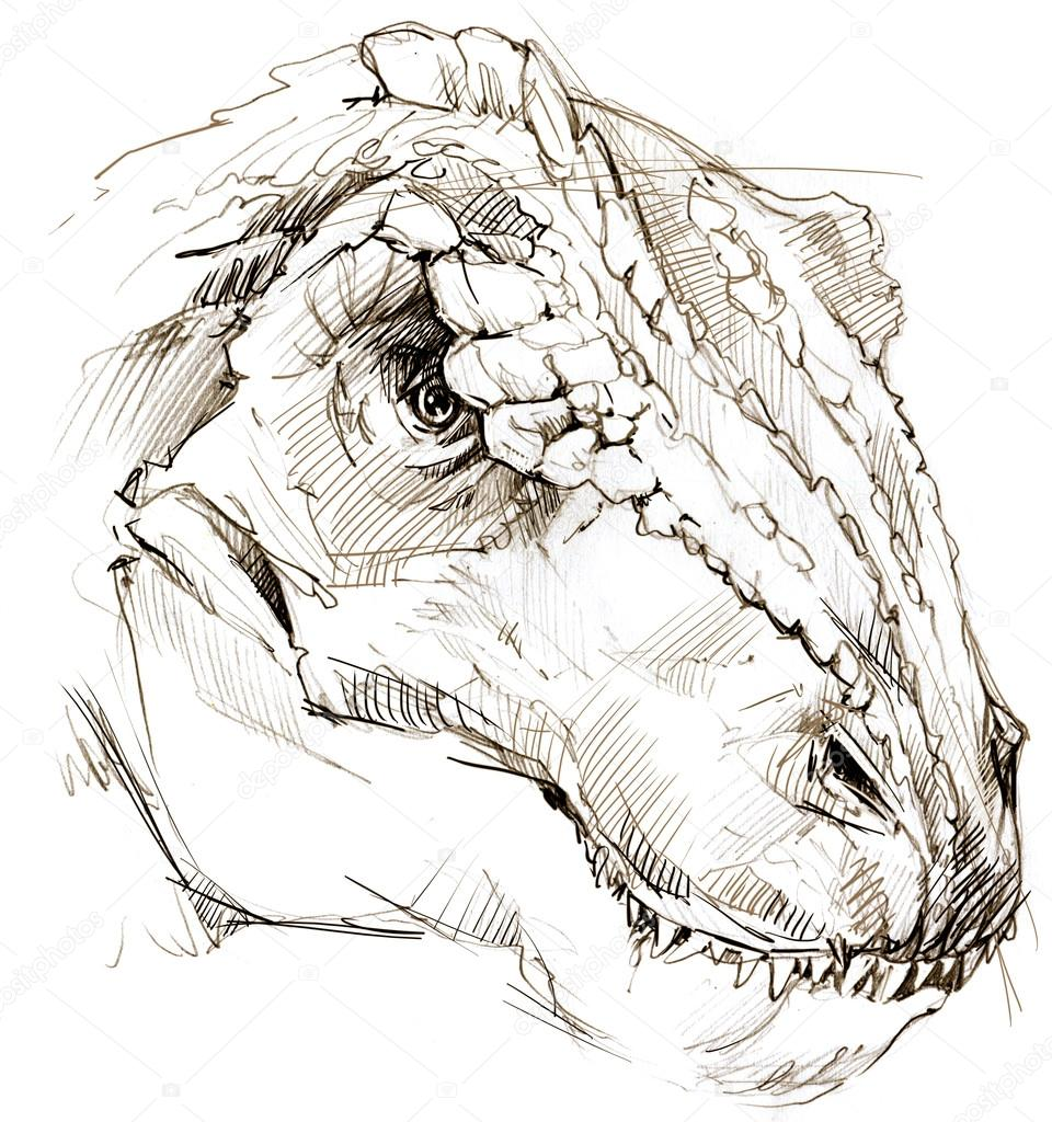 Dinosaur dinosaur drawing pencil sketch stock image