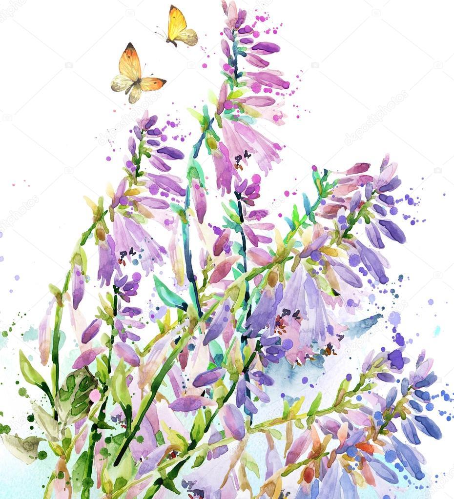 Watercolor garden flower. Watercolor rose illustration. Watercolor ...