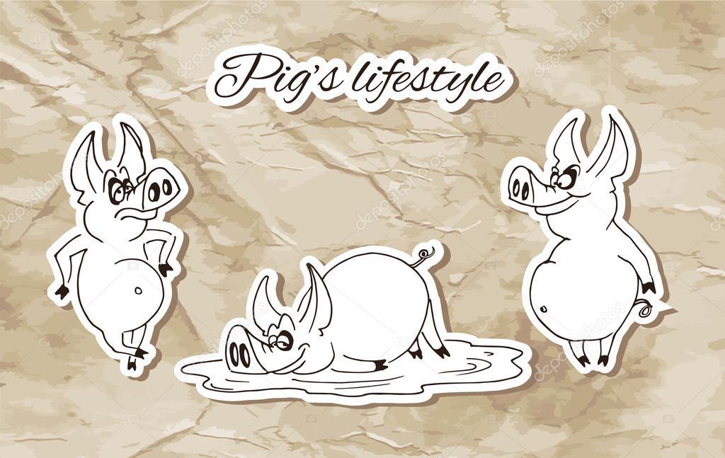 Pig's Lifestyle