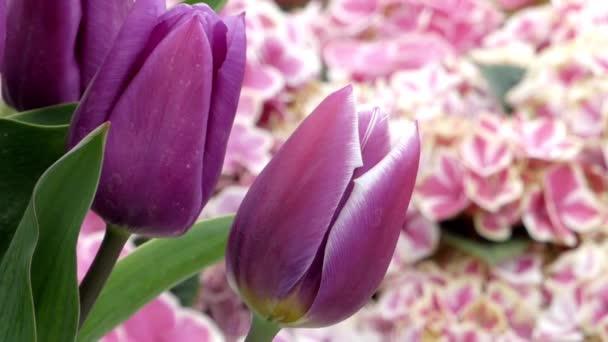 krásné tulipány v parku