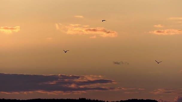 Möwe fliegt in Zeitlupe am gelben Himmel.