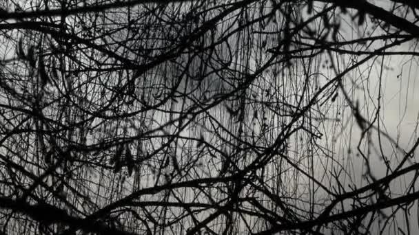 Slunce v zimním lese na zasněžené počasí. Nádherné scény příroda.
