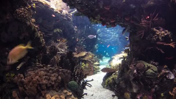 Fishes in Lisbon Oceanarium with corals, Portugal timelapse