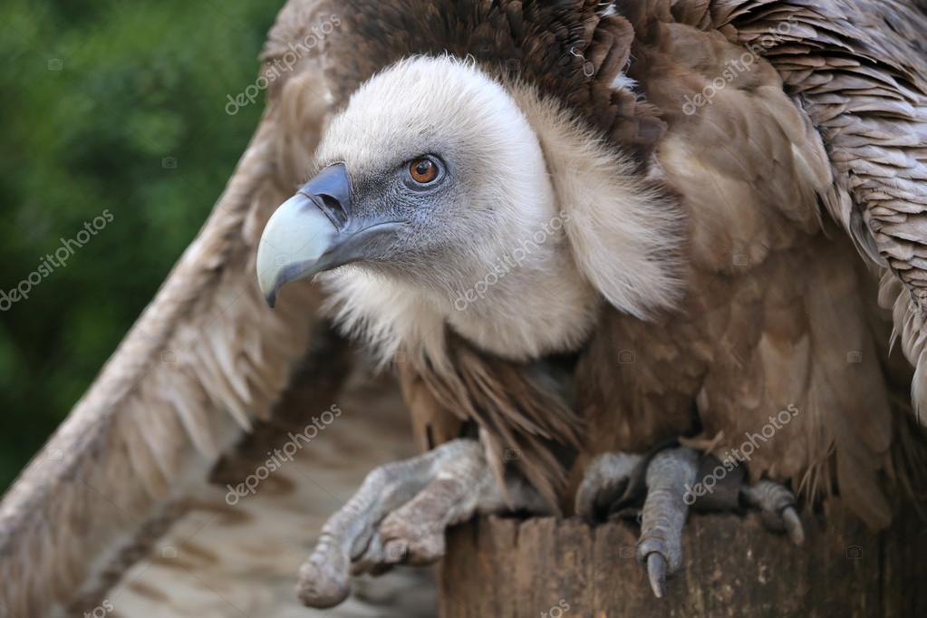 μεγάλο ισπανικό πουλί εικόνες προπόνηση πορνό κανάλι