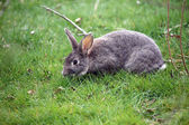 Fotografie roztomilý králík na zelené trávě