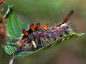 Fotografie Macro close caterpillar