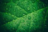 Zelený list s kapky vody po dešti