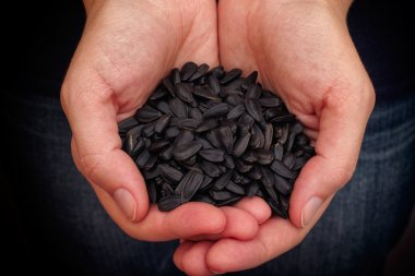 Woman holds fresh sunflower seeds in her palms