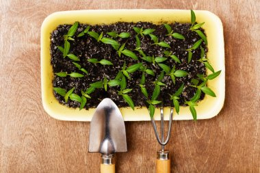 Little Green Sprouts and Small Gardening Tools