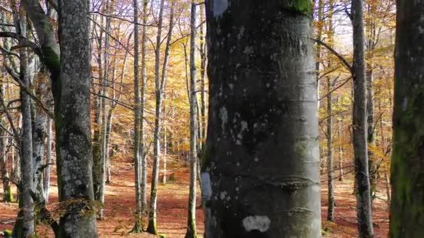 Beechwood in autumn. Urbasa-Andia Natural Park. Navarre, Spain, Europe. 4K.