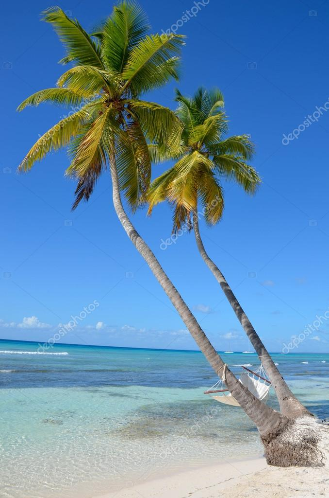 Hammock on a palm tree on the beach