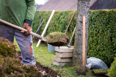 Man using spade for old lawn digging