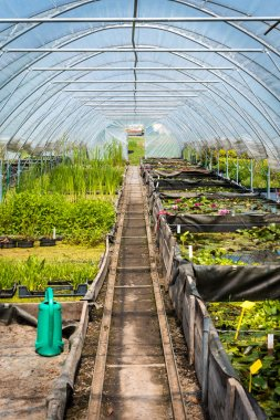 Large greenhouse, plant nursery, garden centre
