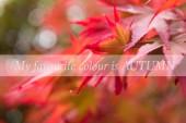Podzimní botaniky pozadí
