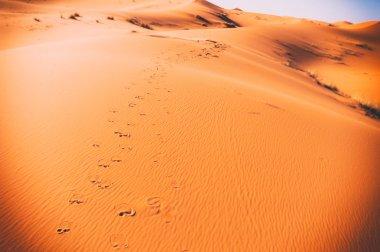 Camel footprints, Sahara, Erg Chebbi, Morocco