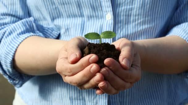 Samice ruce drží malý zelený výhonek