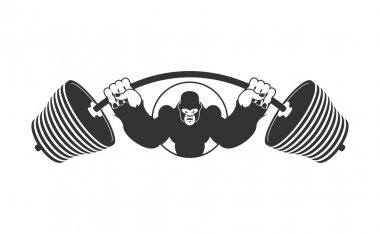 Angry strong Gorilla and  Barbell. athlete Aggressive big monkey