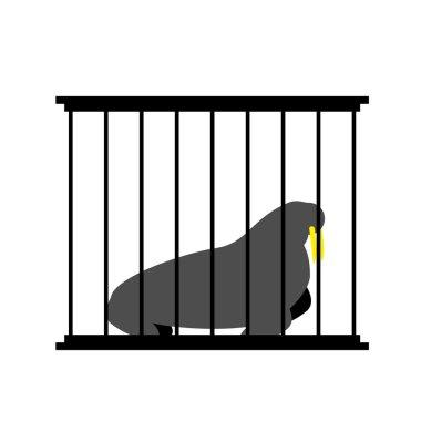 Walrus in cage. Animal in Zoo behind bars. Arctic beast Big capt