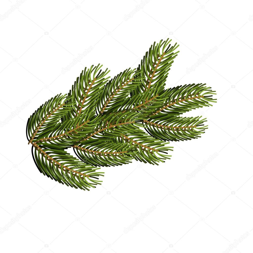 Weihnachtsbaum Ast.Fichte Ast Auf Weißem Hintergrund Weihnachtsbaum Abzweig Nach Desi