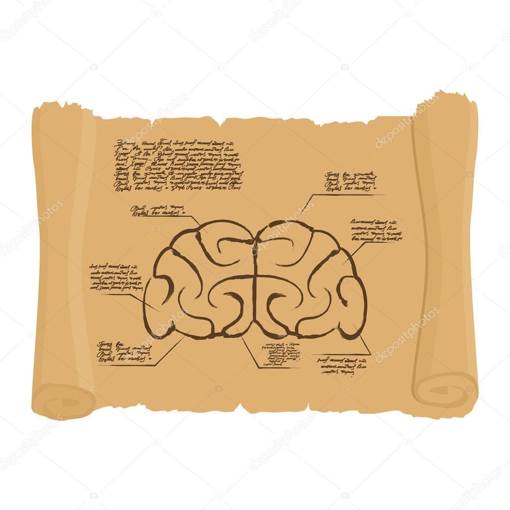 Cerebro de desplazarse dibujo. Cerebro antiguo diagrama. Humanos ...