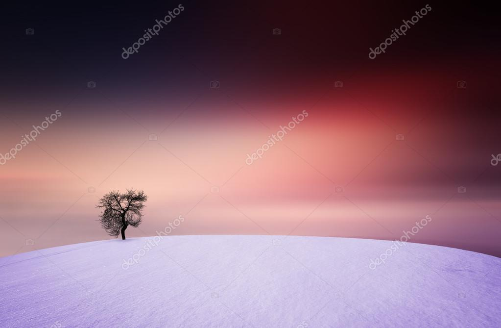 Winter, sunset, tree