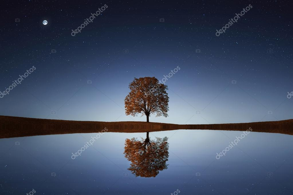 Tree near lake at night