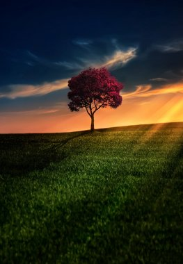 Lonely tree in the field