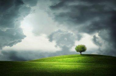 Lone tree in green field