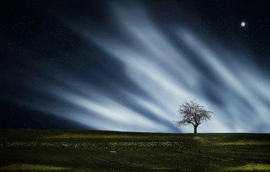 Dry tree at night