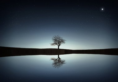 Tree reflected in the lake