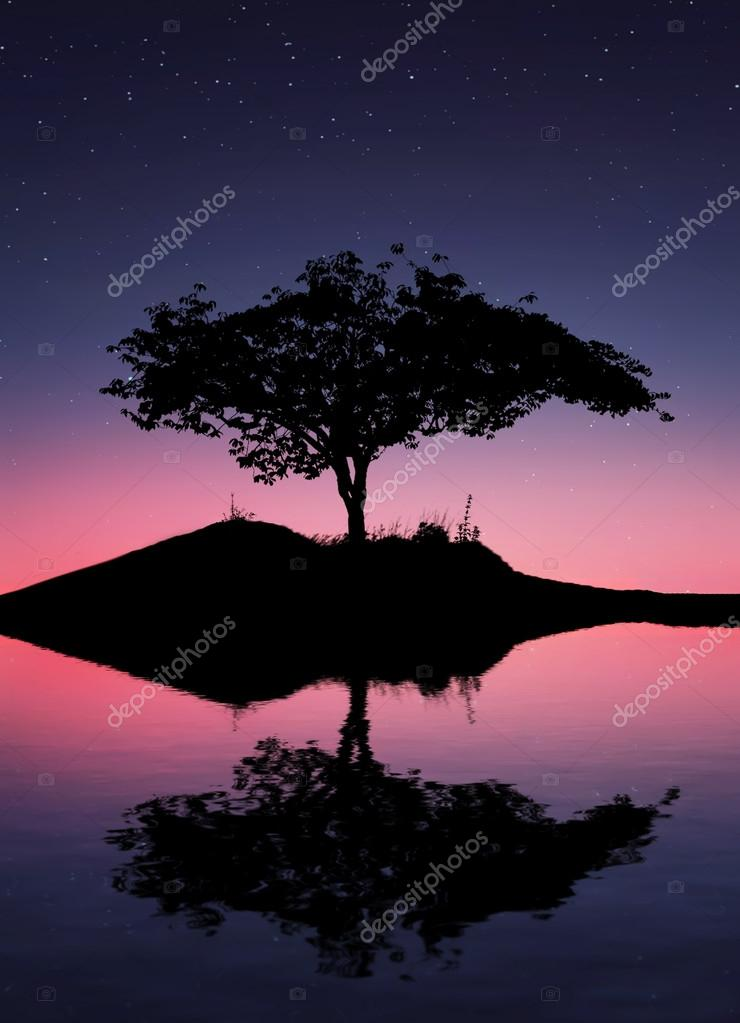 Фотообои Reflection tree in water
