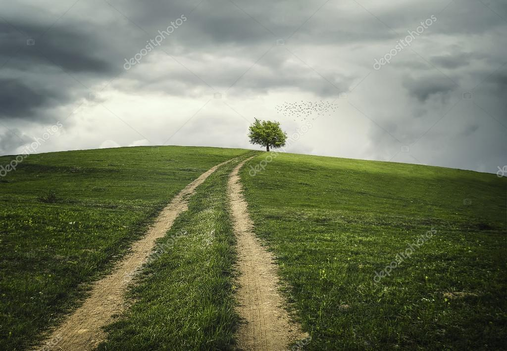 The road to tree...