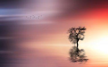 Solitude tree with birds