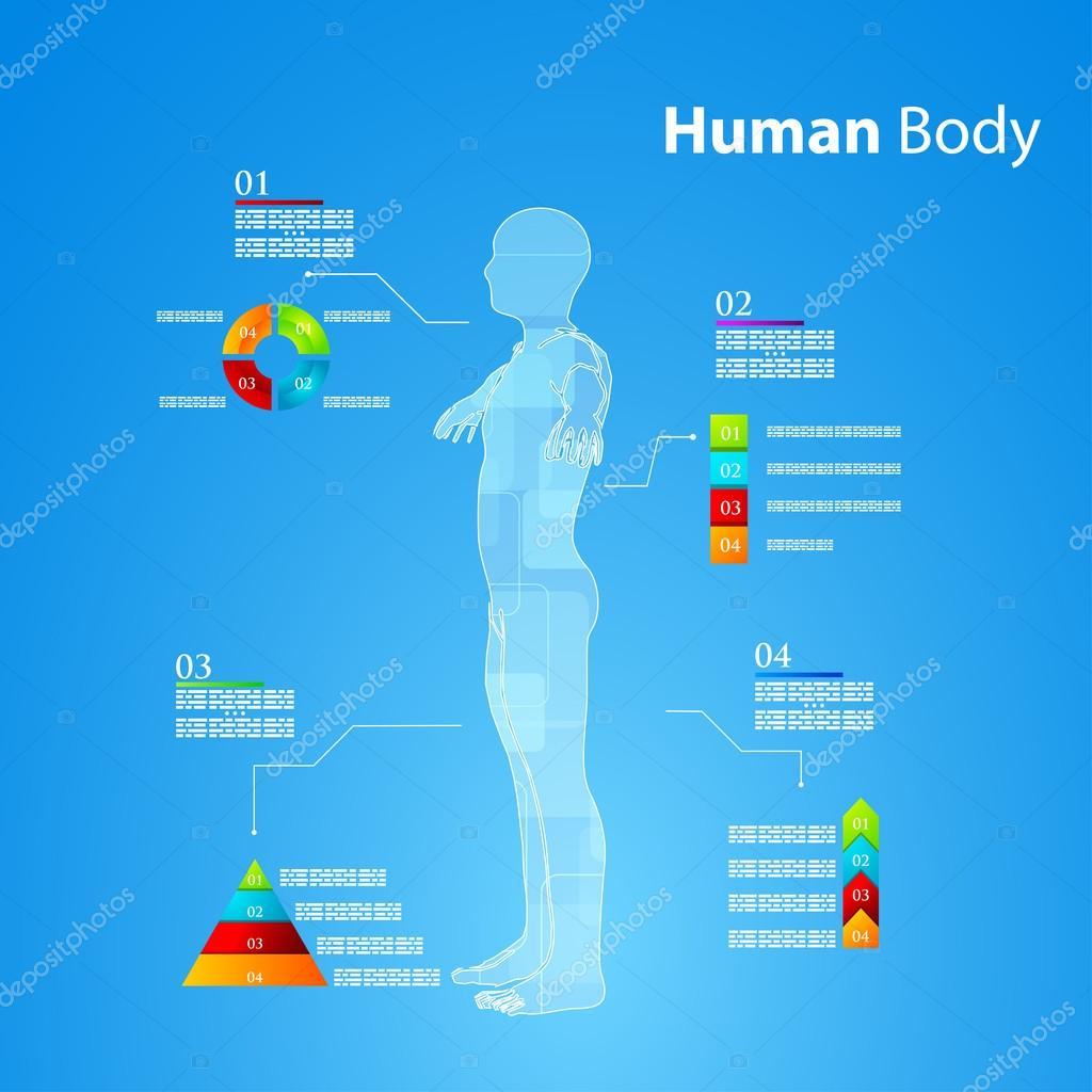 Infografiken menschliche Körper-Anatomie — Stockvektor © ponomarenko ...