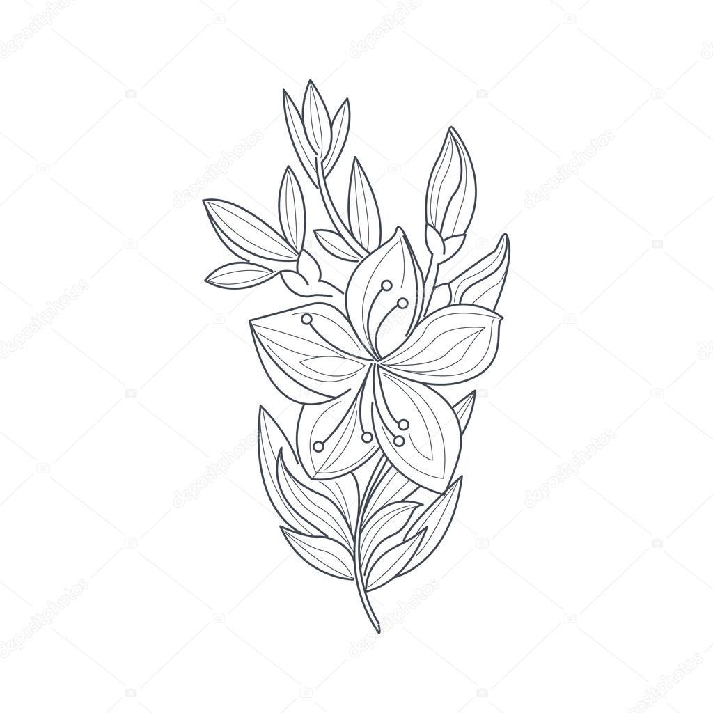 Yasemin çiçeği Tek Renkli çizim Boyama Kitabı Için Stok Vektör
