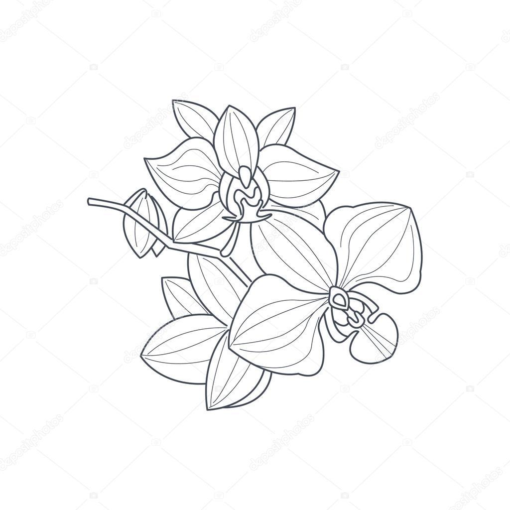 Dessin Fleur D Orchidée fleur d'orchidée dessin monochrome pour coloriages — image