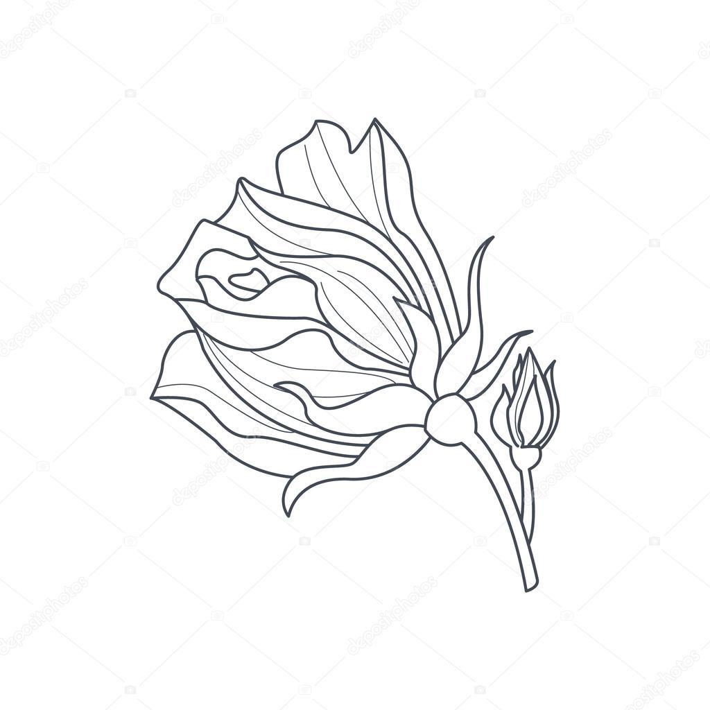 Del brote de Rose Monochome dibujo para colorear libro — Archivo ...