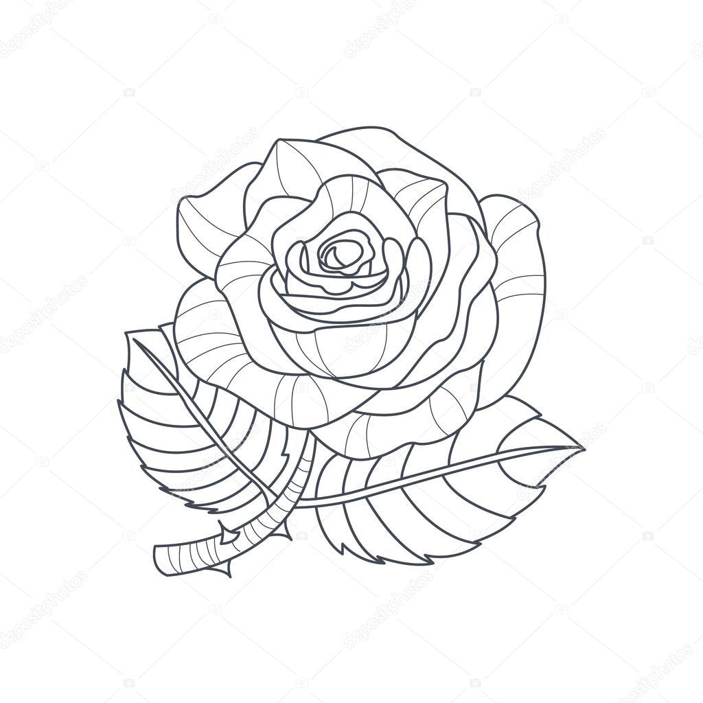 Boyama Kitabı Için Gül çiçek Tek Renkli çizimi Stok Vektör