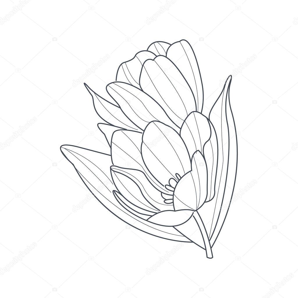 Lale çiçek Tek Renkli çizim Boyama Kitabı Için Stok Vektör
