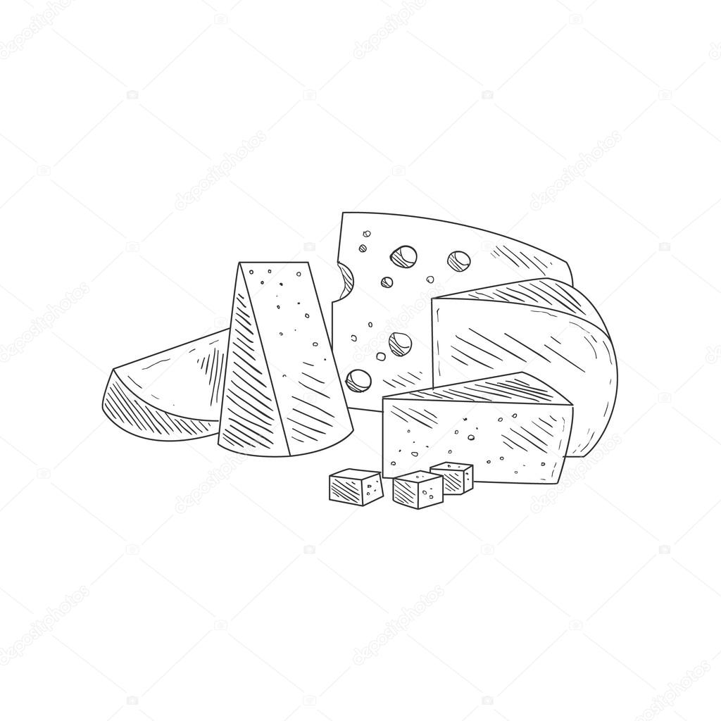 Cheese assortment plate hand drawn realistic detailed sketch in classy simple pencil style on white background vector by