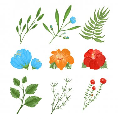 Set of traditional and tropical flowers