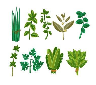Set of 9 vector herbs